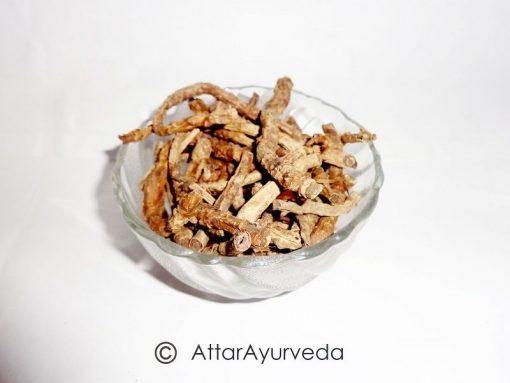 Kutki - Katuki - Picrorhiza Kurroa