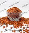 Malkangni – Jyotishmati-Celastrus Paniculatus