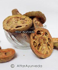 Rudravanti fal -Cressa cretica Fruit- Littoral bind weed