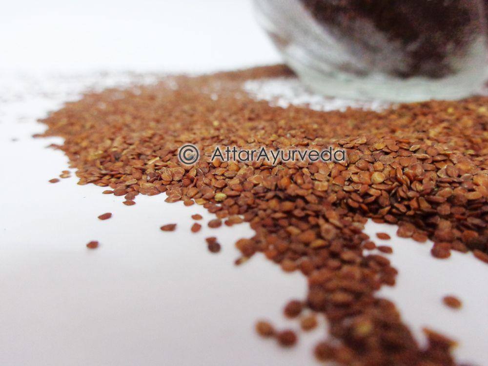 Lajwanti - Lajjalu - Mimosa Pudica