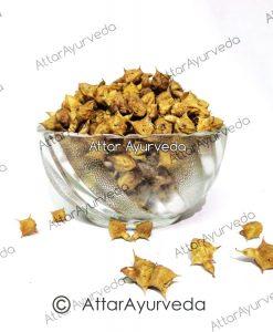 Bada Gokhru - Large Caltrops - Pedalium Murex