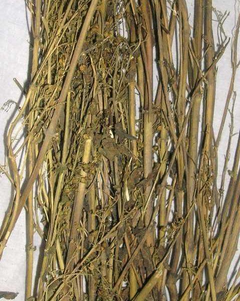 Chirata / Chirayta - Bitterstick - Indian Gentian - Swertia chirayita