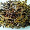Dikamali - Gandharaj - Gardenia Gummifera
