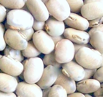 Kaunch Seeds - Kavach Beej - Mucuna Pruriens (White)