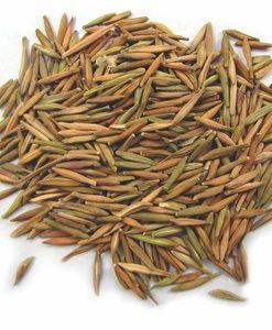 Karva Indrajau - kutaja - Holarrhena pubescens