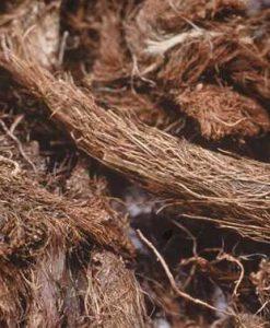 Jatamansi - Spikenard - nard - nardo - muskroot