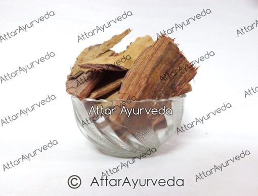 Arjuna Chaal - Terminalia Arjuna - Arjuna Bark