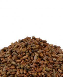 Pawad Seeds